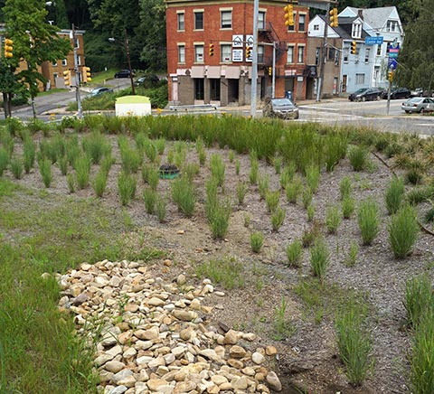 Stormwater protection with native plants and gravel